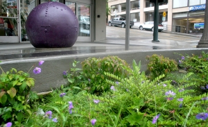 The Pacific Avenue Streetscape Project comes into bloom, perfectly complementing the colorful sculptures by Elizabeth Conner.